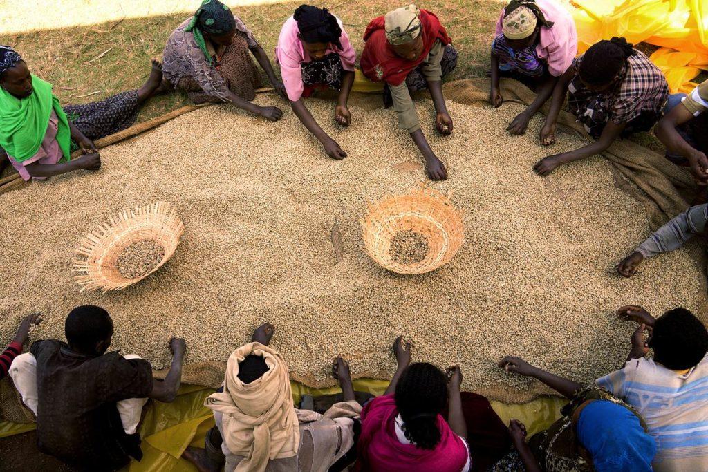 coffee- ethiopia