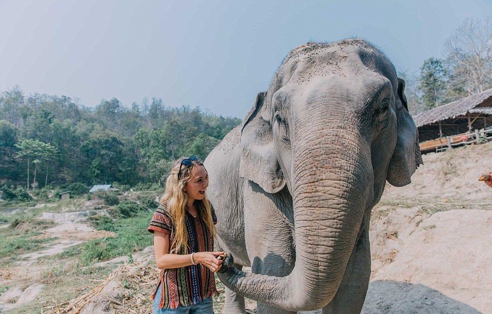 elephant polkadot passport