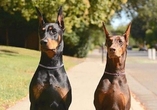 dog- 1