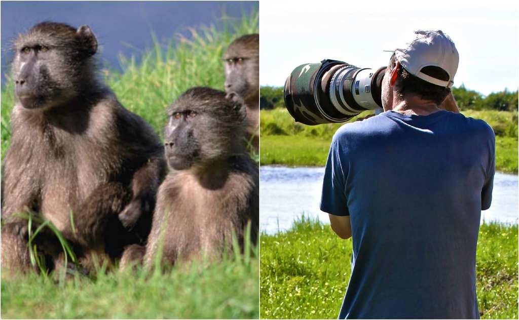 baboon 32