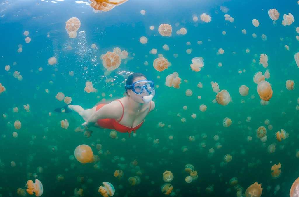 jellyfish 1