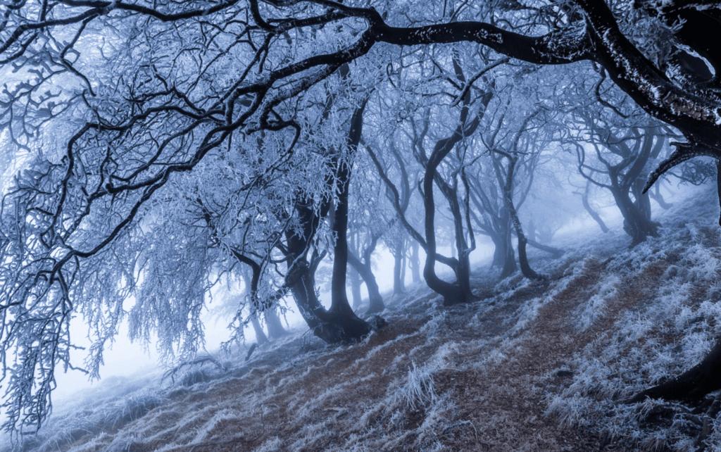 wood-snow
