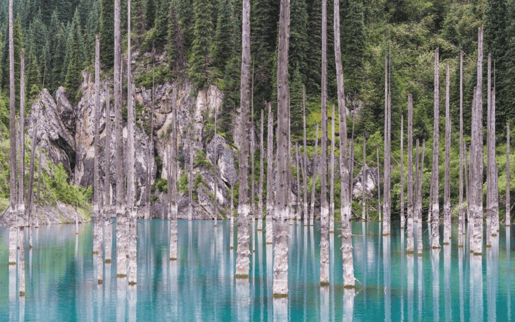 wood-lake