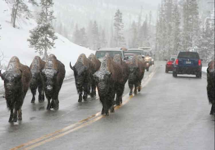 man_file_1058748_50.Wyoming_14908939266826