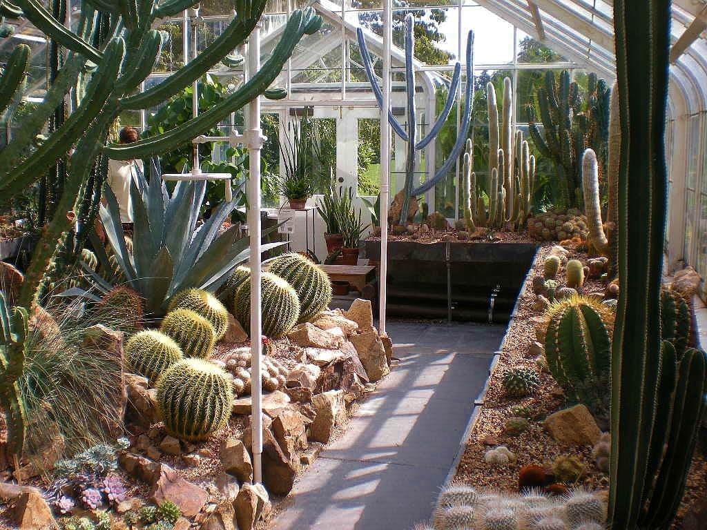 Cactus conservatory
