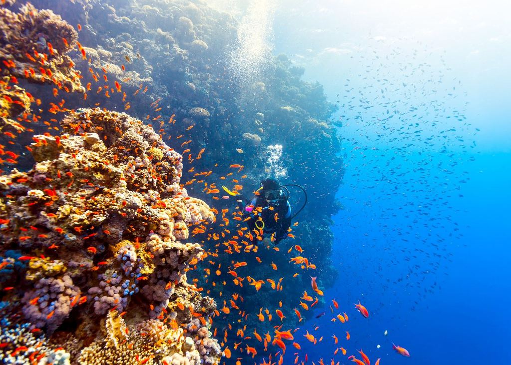 an underwater shot of the Red Sea